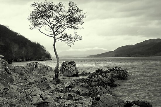 Tree with a View by lochnesslife