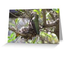 Hummingbird Momma Feeding Her Baby Greeting Card
