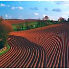 Ridges by SWEEPER