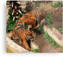 Caught!!!! Metal Print