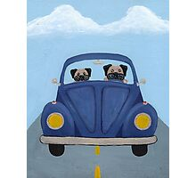 Pugs in a Bug Photographic Print