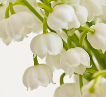 Lily Of The Valley - Macro  by Sandra Foster
