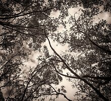 Look Up by Clare Colins