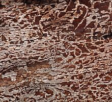Signs in the wood; Bark beetle traces.  by Zosimus