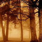 Fog and woods by Cricket Jones