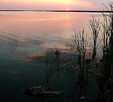 Early Morn on the Marsh by Larry Trupp