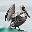 Brown Pelican 2 by Teresa Zieba
