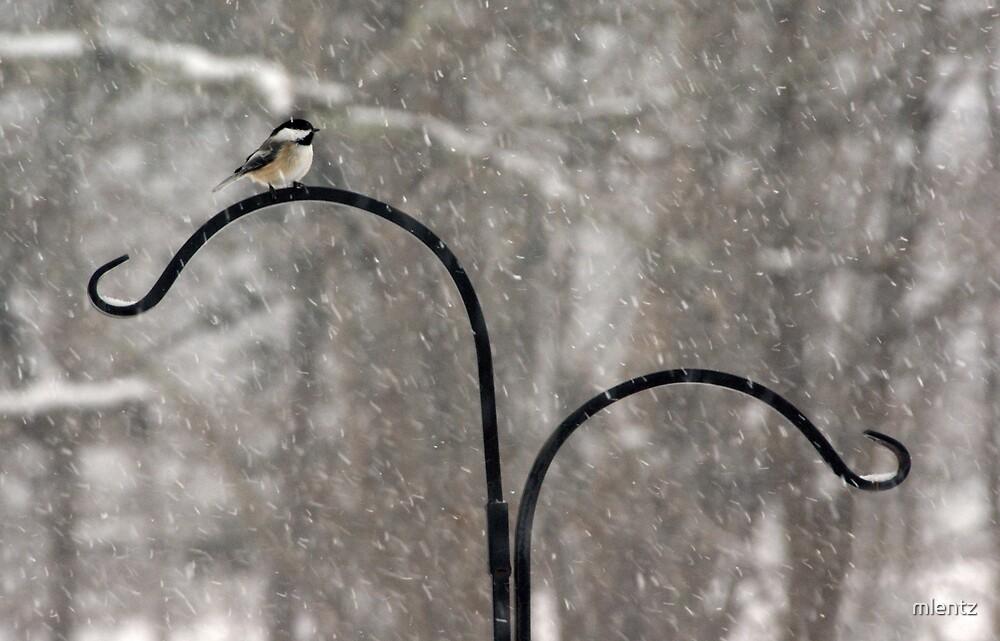 Chickadee in Snowstorm by mlentz