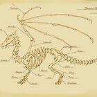 European Mountain Dragon Anatomy by MrMagikMan