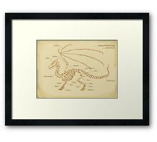 European Mountain Dragon Anatomy Framed Print