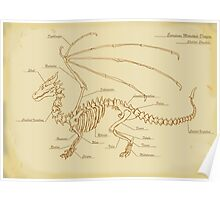 European Mountain Dragon Anatomy Poster