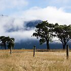 clouds and trees by Anne Scantlebury