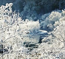 Frosted Flora by missmoneypenny