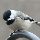 Cheeky Chickadee 7 by WalnutHill