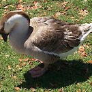 Chinese Brown Goose by Virginia N. Fred