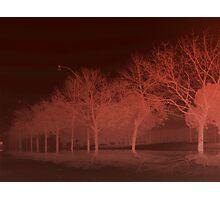 trees Avenue Photographic Print
