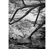 Fallen rush Photographic Print