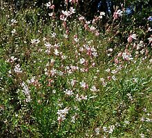 Gaura Butterfly Bush  by Margaret Stevens