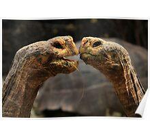 Tortoise Magic Poster
