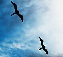 Frigates Skyward by Sue  Cullumber