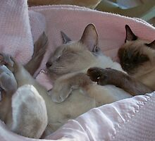 Sleeping Cats by pattis30