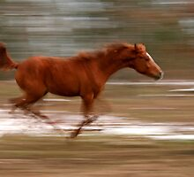 Speed by Sharon Morris
