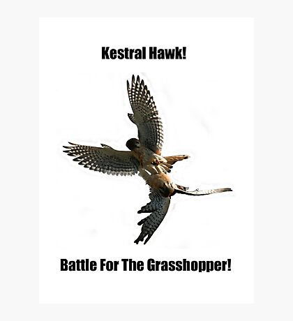 Kestrel Falcon Battle For The Grasshopper iPhone Case and Clothing Photographic Print
