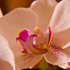 Macro View of an Orchid by Richie Wessen