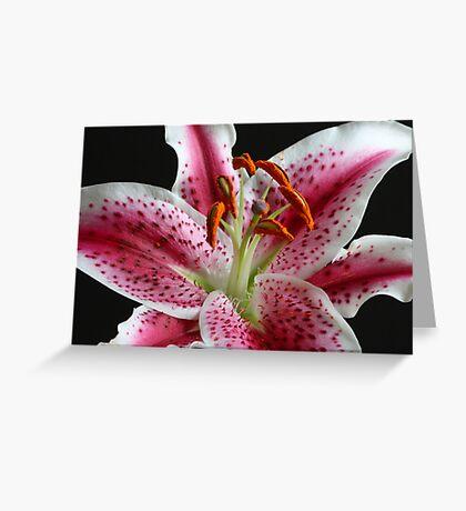 Stargazer Lily Greeting Card