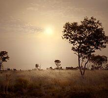 desert dogs by Kaimaha