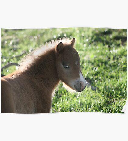 Harry Hershey Kisses Miniature Horse Poster