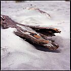 Driftwood by raoulphoto