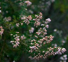 Blossom by Ieva Samsina