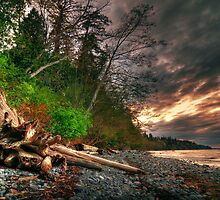 Washed Ashore by Len Langevin