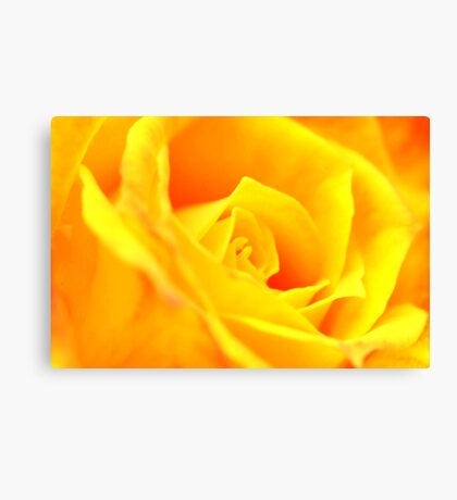 Yellow Rose for Mum Canvas Print