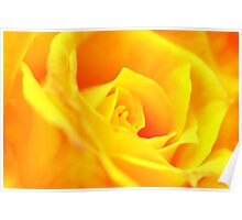 Yellow Rose for Mum Poster