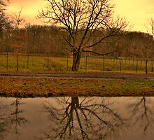 Solitude, Moritzburg, Saxony by Senthil Nath G T