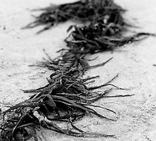 Seaweed I by zomt