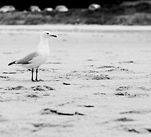 Gull by zomt