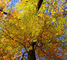 Fall, Saxony by Senthil Nath G T