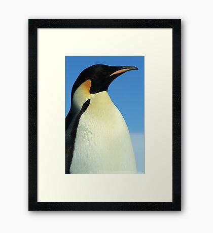 Modest Penguin Framed Print