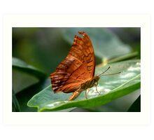 Cruiser Butterfly  II Art Print