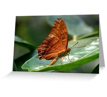 Cruiser Butterfly  II Greeting Card