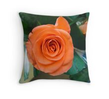 Close up of a peach colored rose Throw Pillow