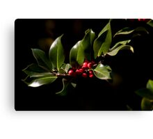 Holly bush Canvas Print