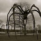 Attack of the spiders by Alexandria