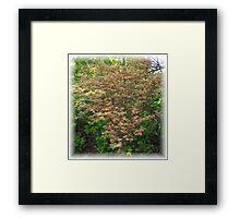 Butterfly Japanese Maple in Spring Framed Print