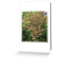 Butterfly Japanese Maple in Spring Greeting Card