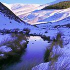 Gentle Winter Stream by Thomas Fitzgerald