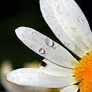flower art by Rase Littlefield